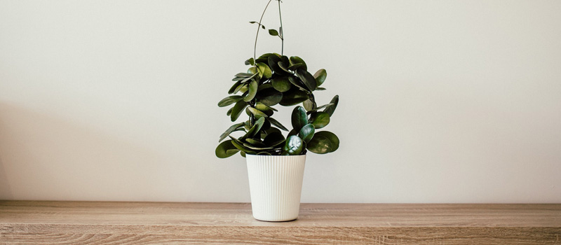 How House Plants Can Reduce Your Stress